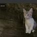 webで完結!無料で使える3D viewer 「sketchfab」の使い方